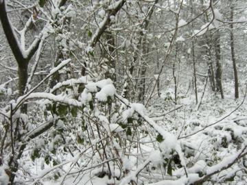 Le poids de la neige